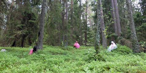 skogsbadtopp